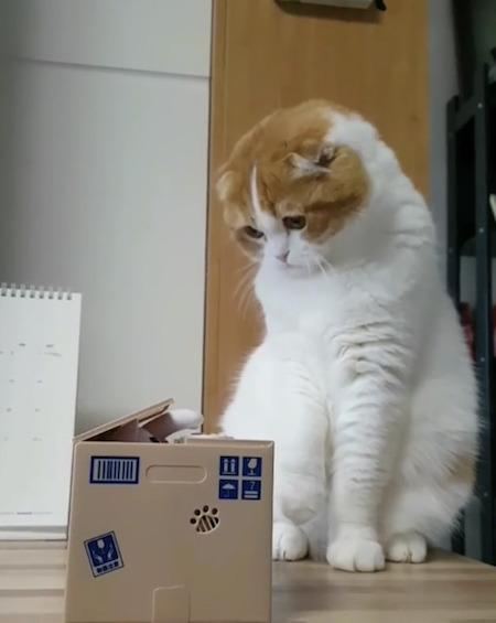 猫とオモチャ