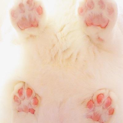 無重力猫ミルコ