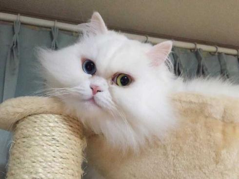猫 毛 ヒゲ 郵送 母
