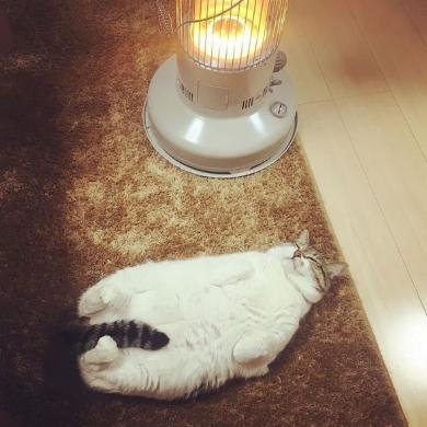猫 ストーブ ぶさお