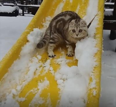 滑り台猫ちゃん