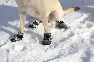 愛犬の冬の足のトラブル
