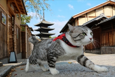 野良猫ニャン吉