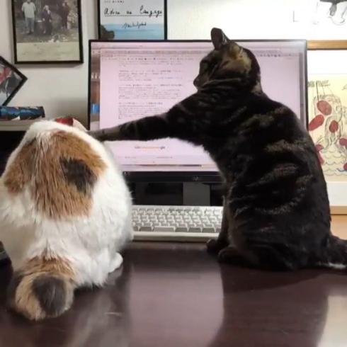 スローモーション猫