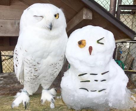 須坂市動物園フォトコンテスト