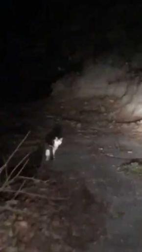 山の中 猫 道案内 車