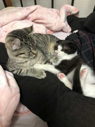 猫 いちゃいちゃ 2匹 仲良し 動画