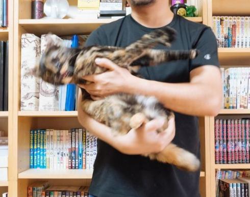 抱っこで分かる猫の性格