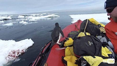 南極観測隊 ペンギン ハプニング かわいい