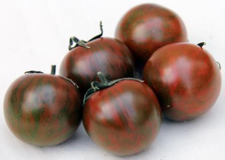 トマト ゼブラ柄 amazon