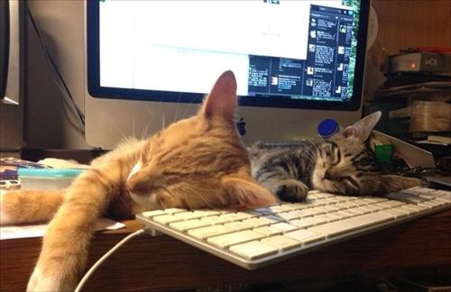 猫に関する調査