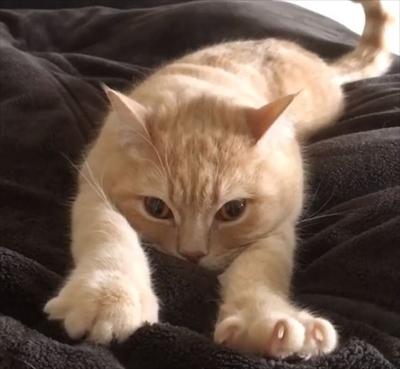 フミフミ猫ちゃん