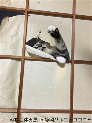 ねこ休み展 in 静岡パルコ