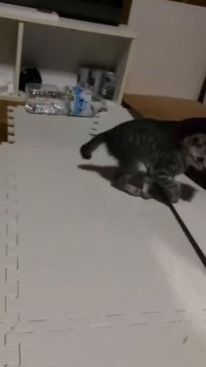 猫 歩き方 病院 仮病