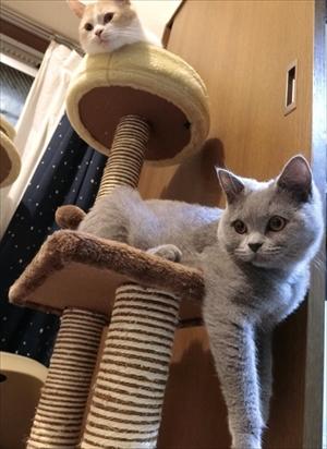 猫のパティちゃん