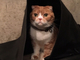 大杉漣のブログが更新、愛犬&愛猫の写真公開 「私たちは元気に仲良くやってるニャン」
