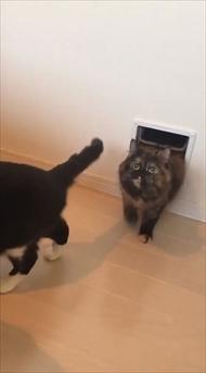 キャットドアから出てくる猫ちゃんたち