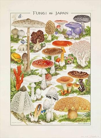 菌類画の世界