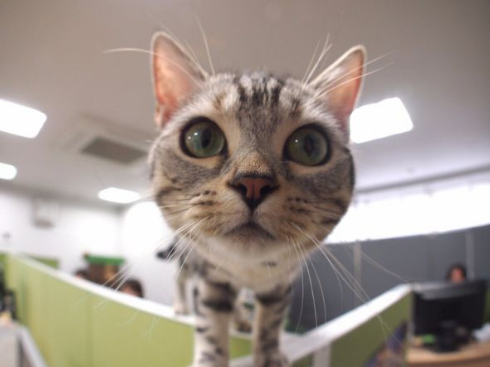 部長 猫 エインシャント 上司 成長