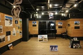 旅猫ニャン吉写真展