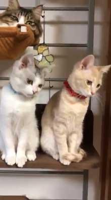フルーツタルト 猫 フェリシモ猫部 クッション