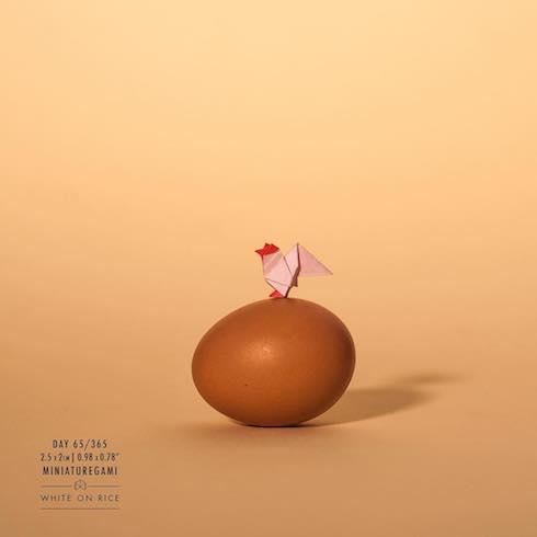 ニワトリと卵の写真