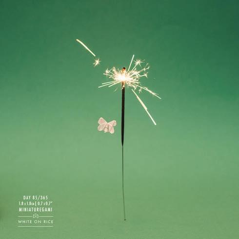 花火と蛾の写真