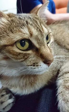 謎の生物 猫 アザラシ