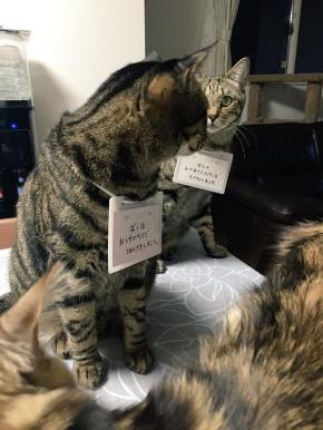 兄弟をかばう猫