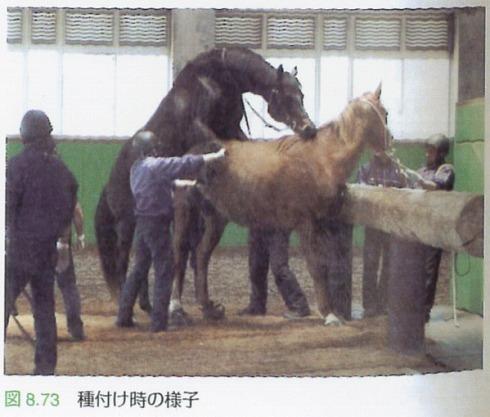 種馬の人生