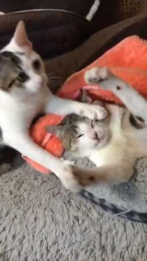 猫 ぺしっ 叩かれる 顔