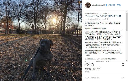 ダルビッシュ有 シカゴ・カブス 野球 犬 保護 バーベキュー