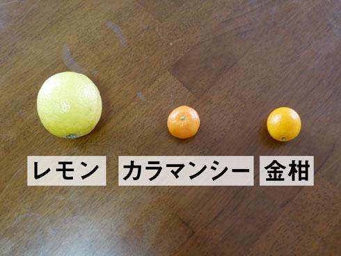 レモン、カラマンシー、金柑との比較