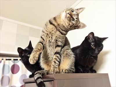 ポーズを決める猫さん