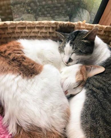 猫の形 長楽寺 御守り 住職さん