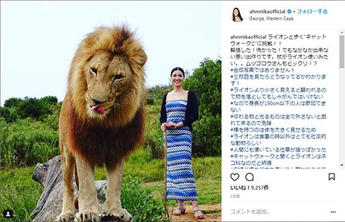 アンミカ ライオン