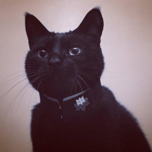 学ラン風の首輪をした猫