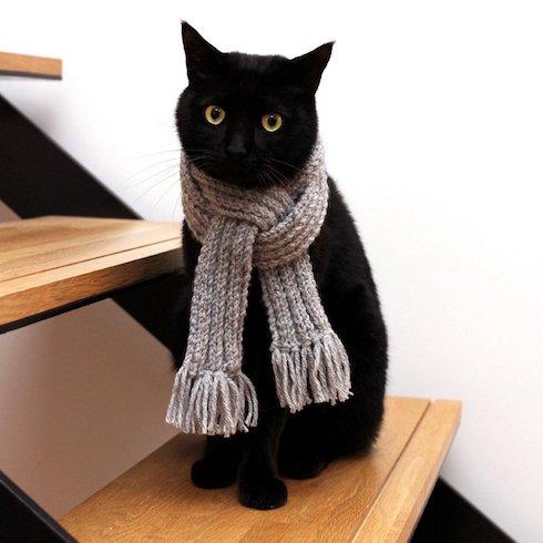 マフラーの首輪をした猫