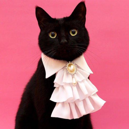クラバット風の首輪をした猫