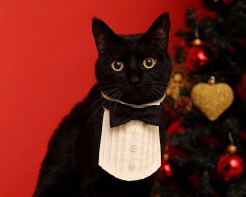 ウイングカラー風の首輪をした猫