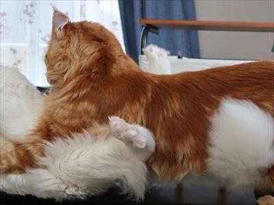 ハグをする猫さん