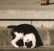 必死すぎるネコ スタンプ