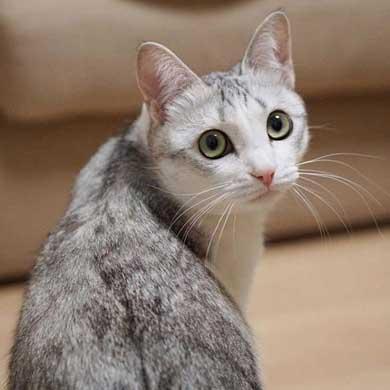 猫 とぼける いたずら 顔 つるちゃん
