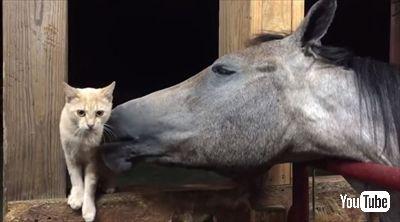毛づくろいをするお馬さん