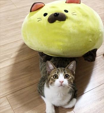 猫のすずめちゃん