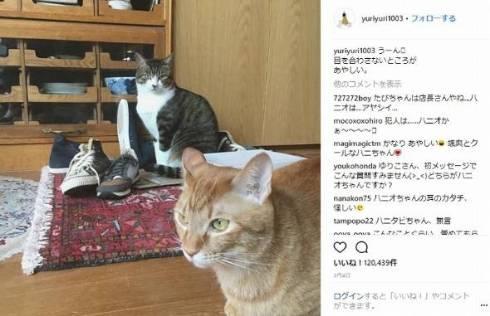 石田ゆり子 ハニオ タビ 猫 ペット 監視カメラ インスタ 泥棒