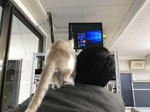 同人誌印刷会社 しまや出版 猫 採用 新人 きなり