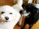 保田圭、2匹の愛犬が相次いで天国へ 「突然の…お別れでした」