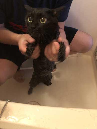 猫 お風呂 風景 悟り 賢者 顔  前髪 洗濯