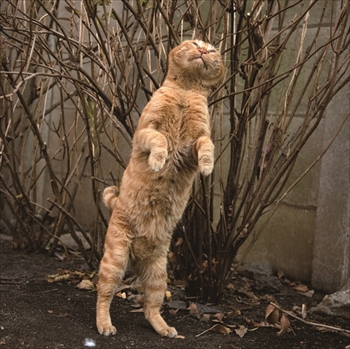 必死すぎるネコ写真展
